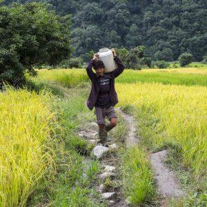 10-14-2014 Punakha - Rice paddies
